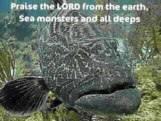 Elderly fish with words of encouragement to praise God no matter what