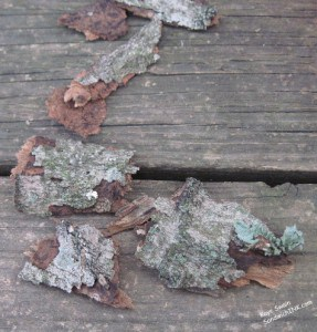 Bark can be used in craft activities for grandparents and their grandchildren
