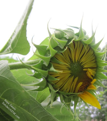 With good spiritual and physical and emotional care - we pray our grandchildren will all follow the Son of God - just as the Sunflower House follows the warm sun