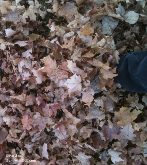 So many autumn leaves falling down they covered a Sandwich Generation granny nannies foot