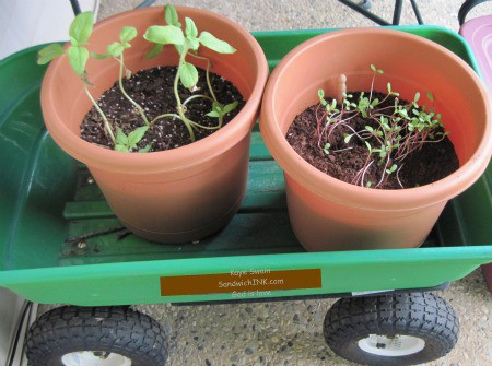 My senior mom loves to use a garden wagon to hold her plants - its a frugal raised beds flower and vegetable garden