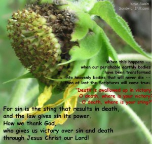 One of the joys of the boomer senior gardening projects for the Sandwich Generation granny nanny is seeing spiritual truths in the plants - like this sunflower