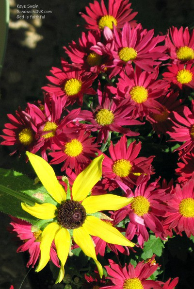 Autumn and Fall are here - our baby boomer and senior gardening projects for fall - sunflowers to mums