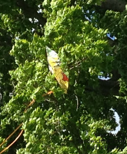Kite flying fun can include grandkids kites stuck in trees