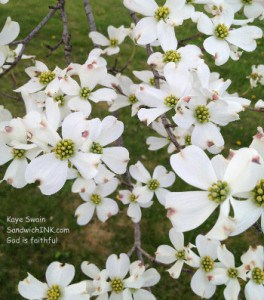 My easy to use digital camera comes in handy to take pix of our lovely Dogwood to share with the Sandwich Generation for Pink Saturday and the #UBP12