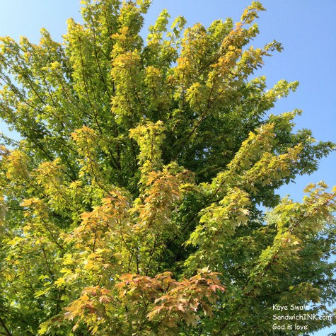 Woohoo - a sight for the hot and tired eyes of this Sandwich Generation granny nanny - Autumn is coming - leaves are turning the shades of fall