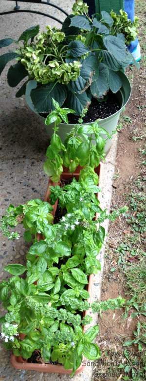 Herbs are a sweet gift for this Sandwich Generation family