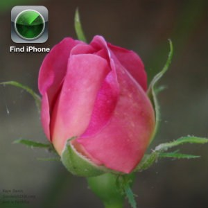 Love this Pink Rose for Pink Saturday things AND love the Find my iPhone app - one of the best iPad apps and accessories for boomers and elderly seniors