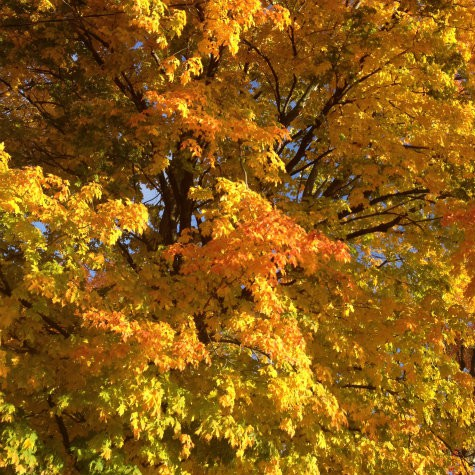 Colorful Autumn bliss for the Sandwich Generation granny nanny