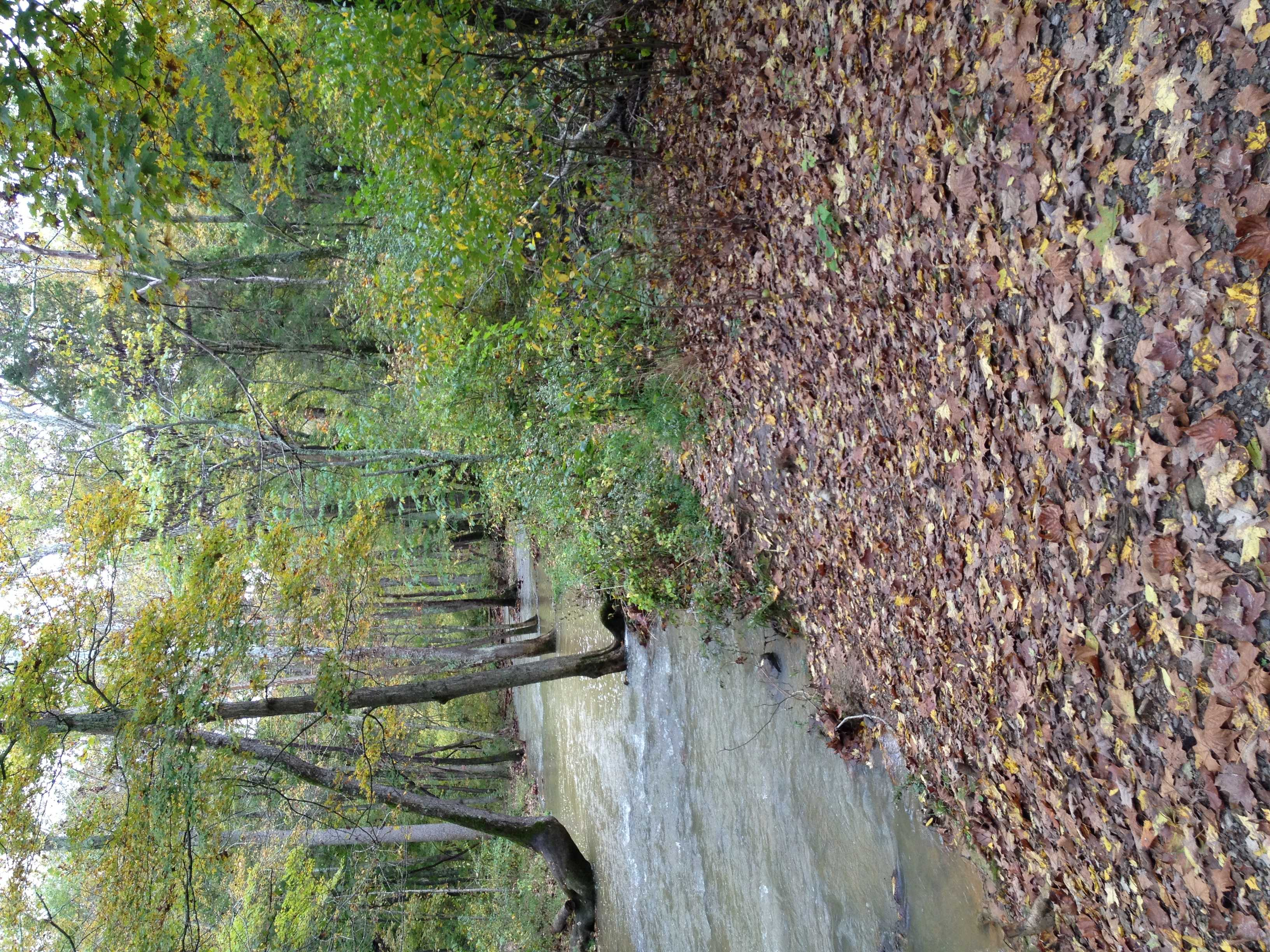Early Fall Foliage Lifts of the Spirits of Both the Caregiver and the Caree