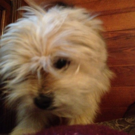 My angsty granddog