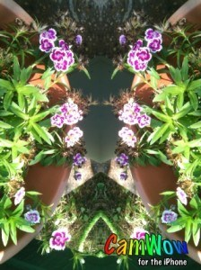 Thanks to CamWow - I have double the pink flowers for Pink Saturday