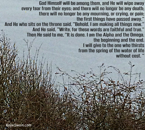 While visiting homes for sale in Pierce County Washington I shot this photo - perfect for these comforting and encouraging Bible verses for all of us boomers and seniors