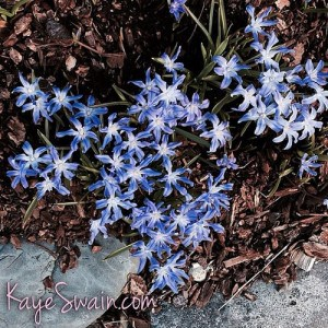 Pierce County Washington blue flowers my elderly mom and I enjoyed