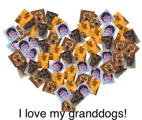 Kaye Swain Roseville REALTOR shares granddog joys