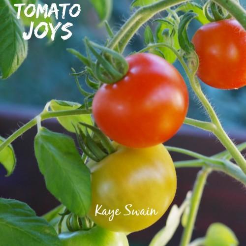 Kaye Swain Roseville Real Estate Agent sharing senior gardening tomato plant joys Sandwich Generation family