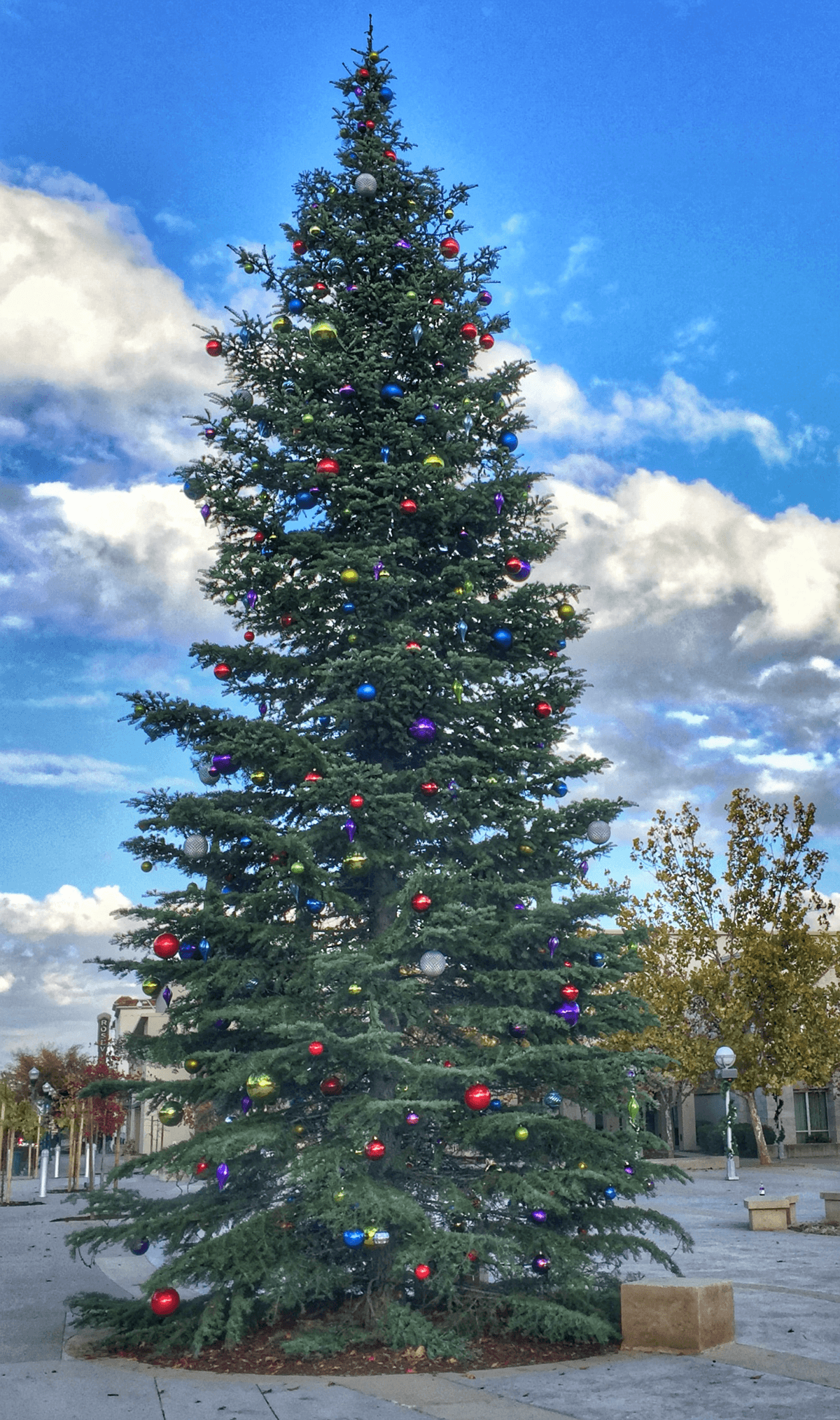 Roseville Real Estate Agent Kaye Swain sharing Roseville Christmas Tree Downtown Square