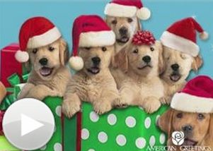 Christmas singing gift cards from Amazon via Kaye Swain Roseville CA multigenerational caregiver REALTOR and blogger