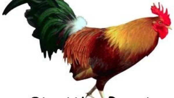 A Strutting red farm rooster is as at home in the Bible as it is in the kitchen decor