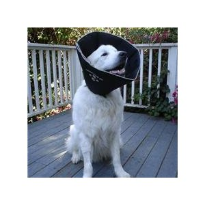Comfy Cone Pet E-Collar for dog dew claw injury looks softer