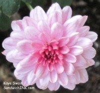 Love pink fall mums - definitely one of my favorite autumn flowers
