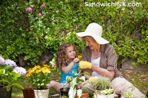 Enjoying Senior gardening sunflower activities grandparents grandchildren