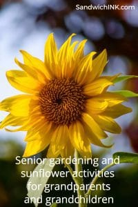 Senior gardening sunflower activities grandparents grandchildren