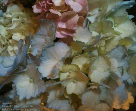 Spring hydrangeas to say Happy May Day to the Sandwich Generation dealing with the issues of caring for elderly parents and babysitting grandchildren