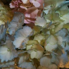 Spring hydrangeas to say Happy May Day to the Sandwich Generation dealing with the multigeneration issues of caring for the elderly parents and babysitting grandchildren