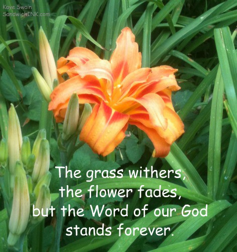 I love the encouraging and comforting Bible verses from Isaiah and enjoyed pairing them with this flower photo from my easy to use digital camera