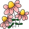 Pretty in pink things these flowers are to put a smile on the face of the Sandwich Generation on this Pink Saturday