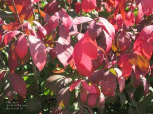 My grandson was thrilled to point out these red autumn and fall leaves - perfect for Rednesday