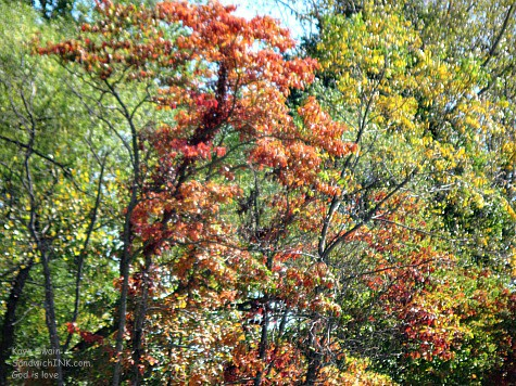 The Sandwich Generation granny nanny and grandkids love the autumn colors and fall foliage