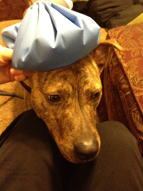 The Sandwich Generation granny nanny appreciated granddog modeling this ice pack for us - complete with a faux look of illness