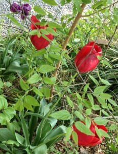 The Sandwich Generation granny nanny finds taking time to enjoy the flowers and capture them with a digital camera is a fun and easy way of caring for the caregiver