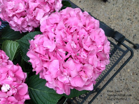 The Sandwich Generation caring for aging parents loves to find gifts for the elderly parents in their family that make them smile - and these hydrangeas did just that