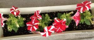 My granddaughter is following in her senior great-grandmas gardening activities - I love her flowers h