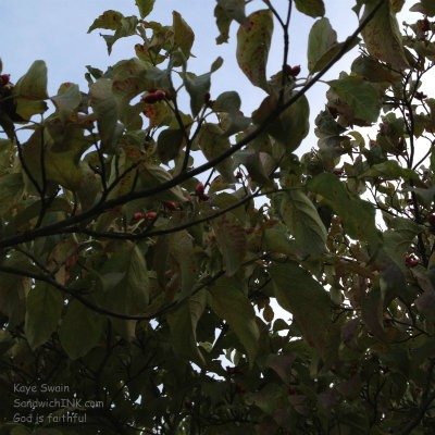 These red berries are another harbinger of fall and autumn coming soon