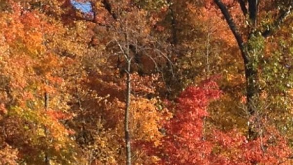 I love the vibrant colors of fall - autumn bliss for this Sandwich Generation grandmother and caregiver