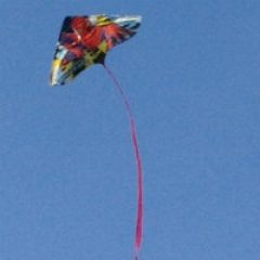 Kite flying activities for grandparents and their grandkids