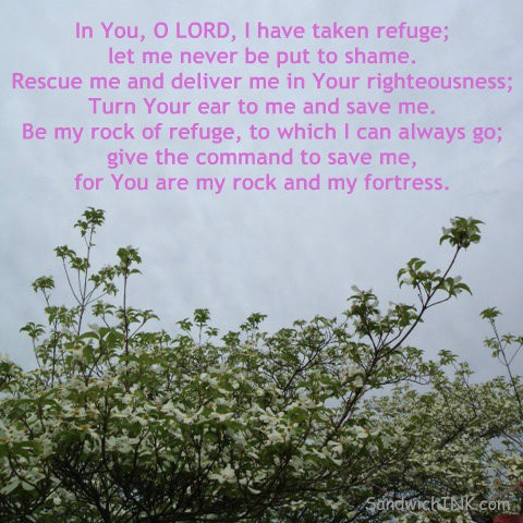 These lovely spring flowers and encouraging Bible verses in PINK definitely brighten the day for my Sandwich Generation family even when we are surrounded by clouds