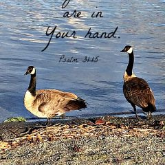 We are blessed to have a lot of geese and ducks and crows in Pierce County Washington - fun for Kaye Swain REALTOR® and my senior mom and YOU