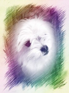Use the cool online photo editor Picmonkey or one of many great apps to edit your grand kid and dog photos via Roseville CA blogger and REALTOR Kaye Swain