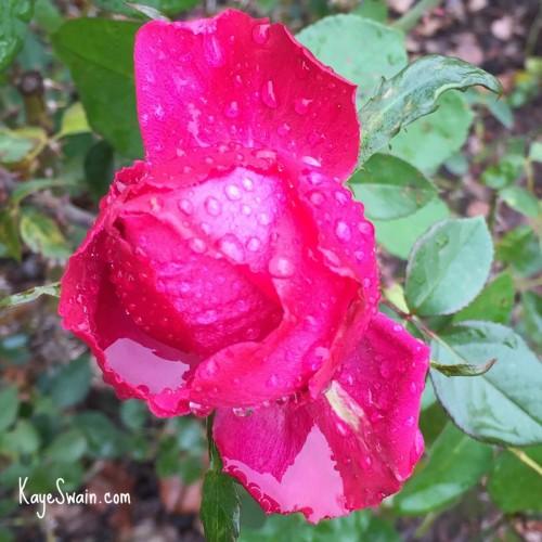 Kaye Swain Roseville CA blog sharing caregivers survival guide and multigenerational caregiving tips