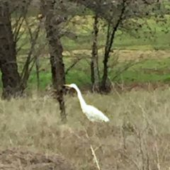 Kaye Swain Roseville CA real estate agent blogger shares egret