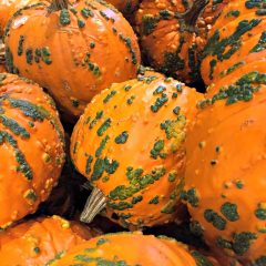 Kaye Swain Roseville real estate agent sharing cool pumpkins squash