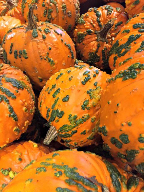Kaye Swain Roseville real estate agent sharing cool pumpkins squash