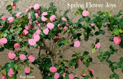 Camellia joys for grandkids grandparents hangman more
