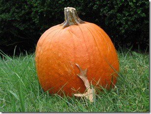 Happy Autumn to all Sandwich Generation Parents - Grandparents - Caregivers - and other Multi-Generational Caregivers